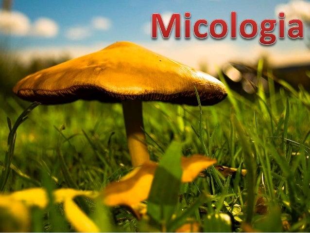  O que é Micologia   História da micologia   Características Gerais dos Fungos   Ficomicetos   Ascomicetos   Basidio...