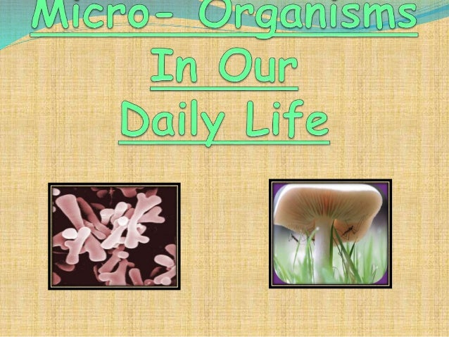 What are micro- organisms? A microorganism is a microscopic organism which may be single cell or multicellular organism ....
