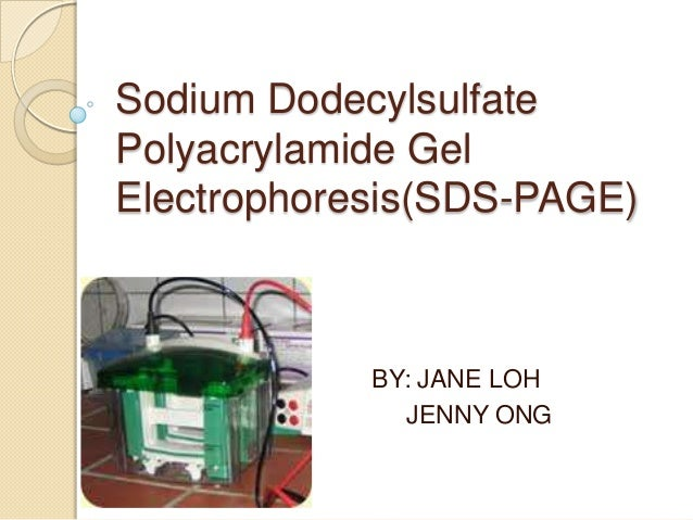 Sodium Dodecylsulfate Polyacrylamide Gel Electrophoresis(SDS-PAGE) BY: JANE LOH JENNY ONG