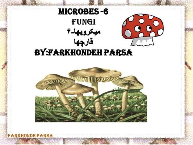 Microbes 6