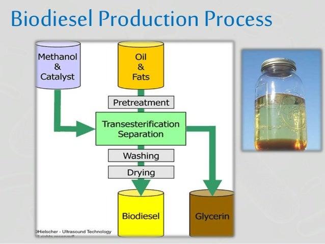 biodiesel production process description essay