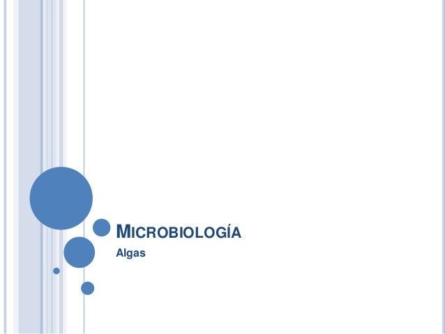 MICROBIOLOGÍA Algas