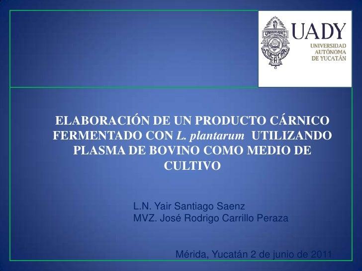 ELABORACIÓN DE UN PRODUCTO CÁRNICOFERMENTADO CON L. plantarum UTILIZANDO  PLASMA DE BOVINO COMO MEDIO DE              CULT...