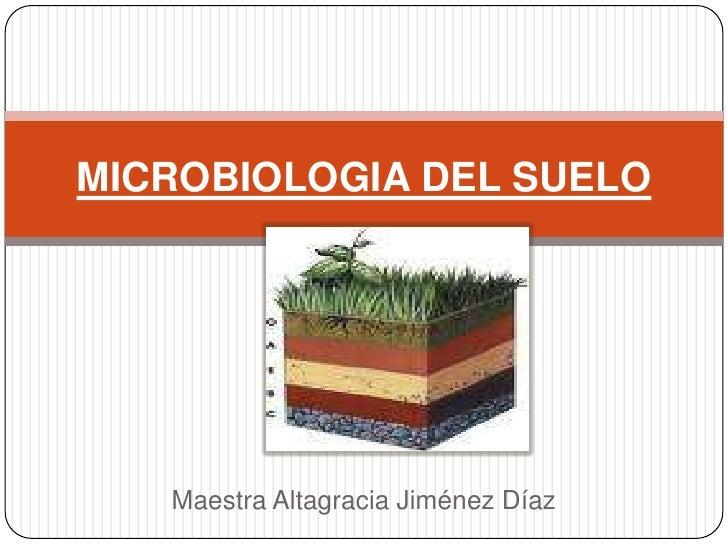 MICROBIOLOGIA DEL SUELO   Maestra Altagracia Jiménez Díaz