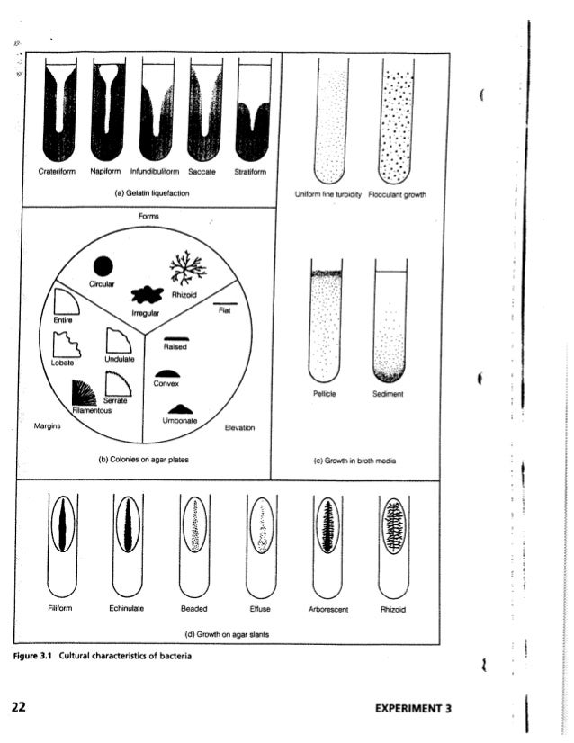 Microbiology a labotory manual(CIIT Abbottabad)