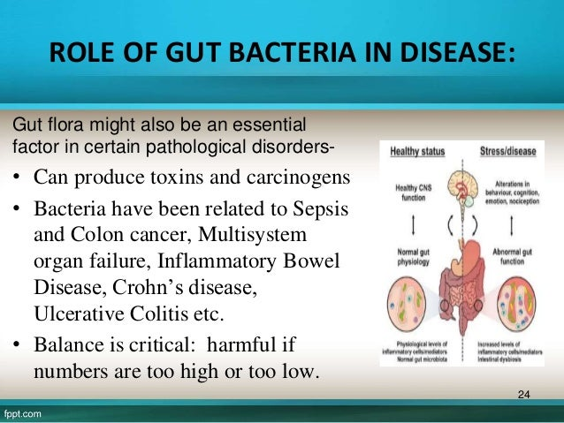 the functions of the gut microbiota essay Thesis gut microbiota waldor, cristiano g because macrophage receptors are crucial to this initial interaction to pathogens and shape the downstream immune response.