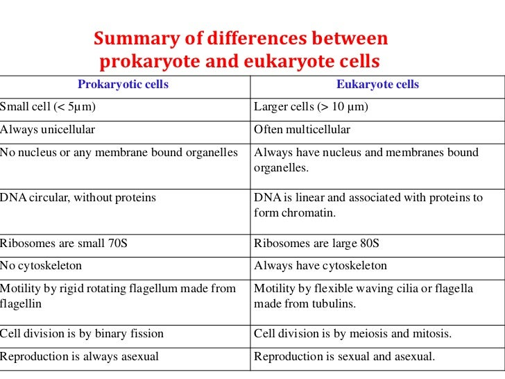 essay writing differences and similarities in cell