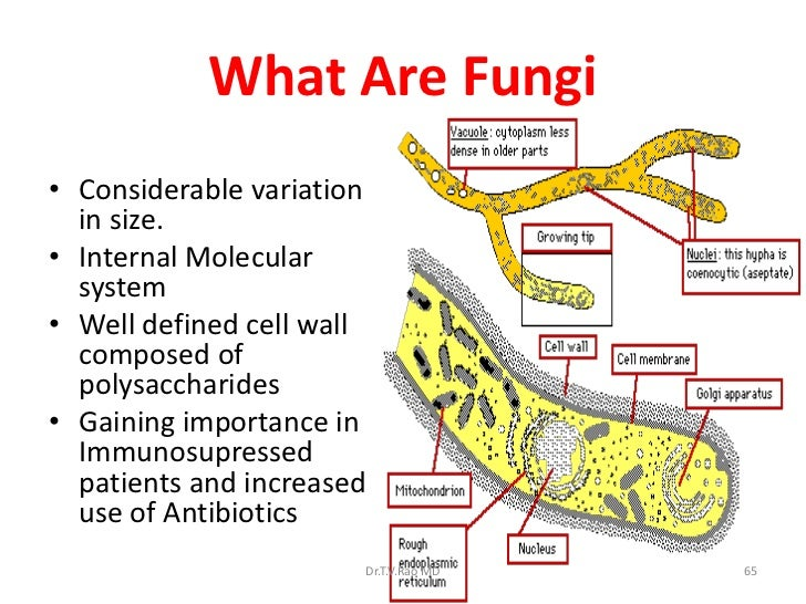 Cell Service Diagram likewise Pond also Labeled Diagram Of Hand Bones further From Simple To  plex as well How Can Eukaryotic Cells Divide. on animal cell labeled