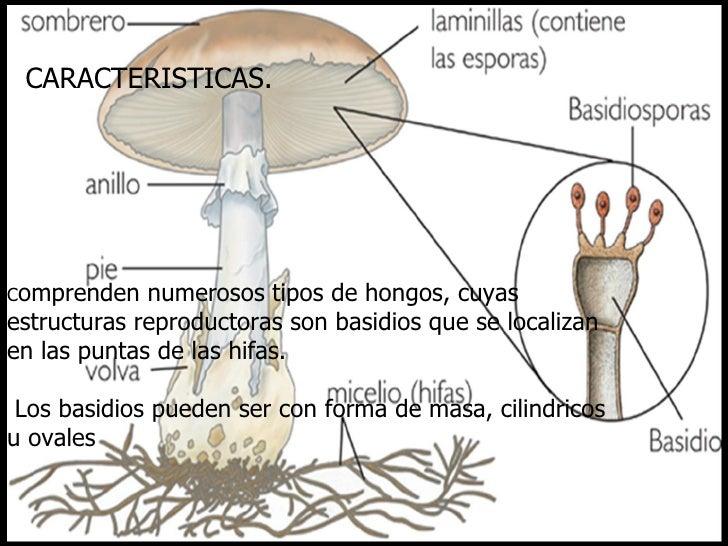 Micro hongos - Tipos de hongos en la pared ...