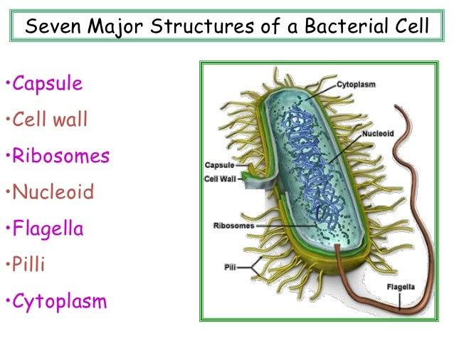 common microorganisms