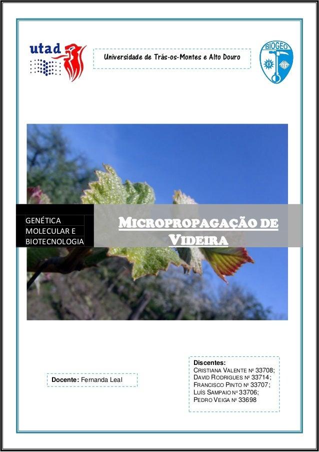 Universidade de Trás-os-Montes e Alto Douro  GENÉTICA MOLECULAR E BIOTECNOLOGIA  MICROPROPAGAÇÃO DE VIDEIRA  Docente: Fern...