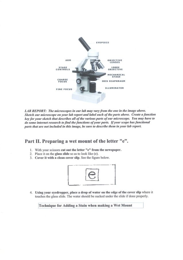 lab report microscope letter e thread The purpose of this lab was to discover how to use and take care of a compound microscope we examined some letters of the alphabet, hair, and thread.