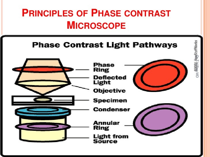 Phase Contrast Microscope Principle Images