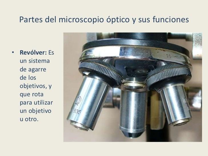 El Blog del Profe de Biolo Partes del Microscopio ptico y su funci n