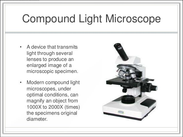 investigating the compound microscope essay Compare and contrast the structure and function of a compound light microscope and a dissecting microscope be sure to discuss when each would be more useful than the other.