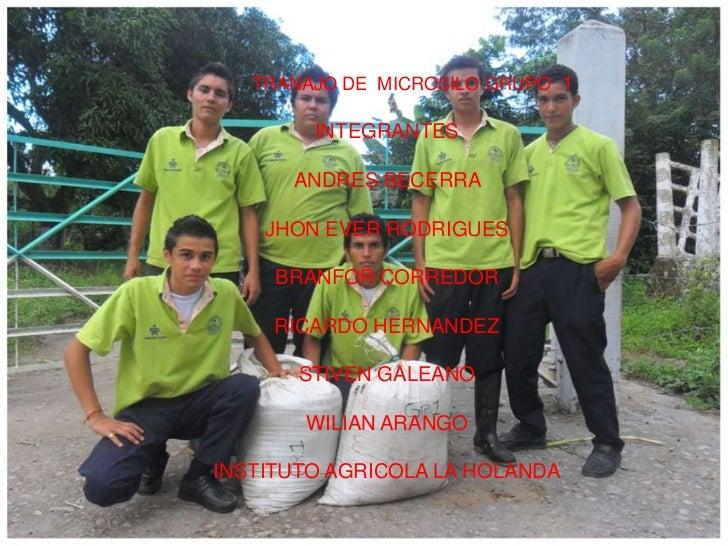 TRANAJO DE  MICROSILO GRUPO  1<br />INTEGRANTES<br />ANDRES BECERRA <br />JHON EVER RODRIGUES<br />BRANFOR CORREDOR<br />R...