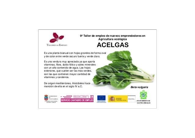 9º Taller de empleo de nuevos emprendedores en Agricultura ecológica ACELGAS AYUNTAMIENTO DE CASTRO URDIALES Beta vulgaris...