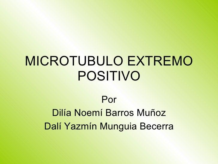MICROTUBULO EXTREMO POSITIVO Por Dilía Noemí Barros Muñoz Dalí Yazmín Munguia Becerra