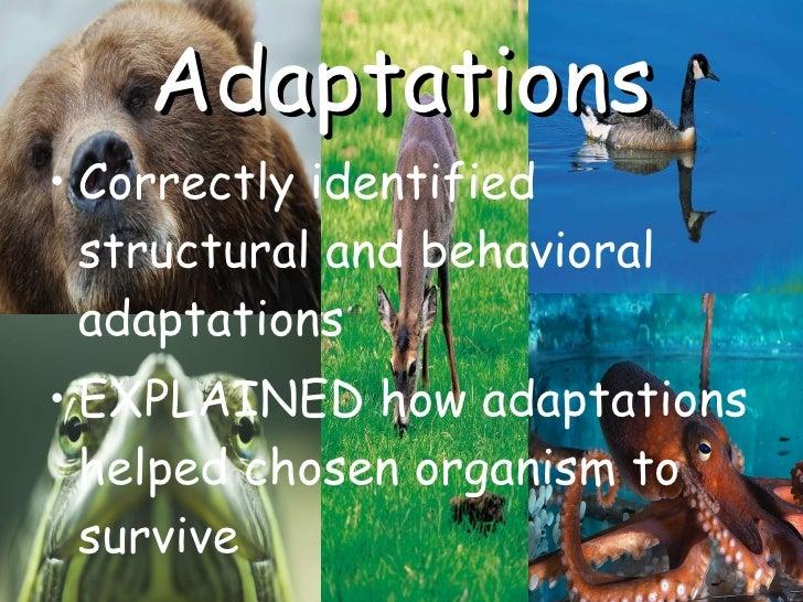 Adaptations <ul><li>Correctly identified structural and behavioral adaptations </li></ul><ul><li>EXPLAINED how adaptations...