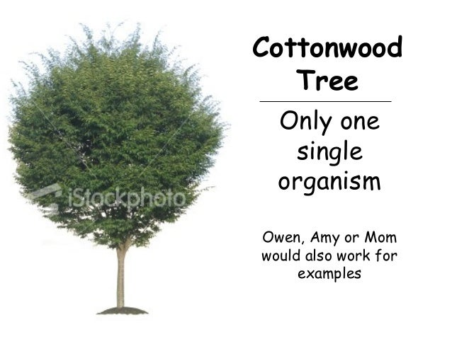 Only one single organism Owen, Amy or Mom would also work for examples Cottonwood Tree