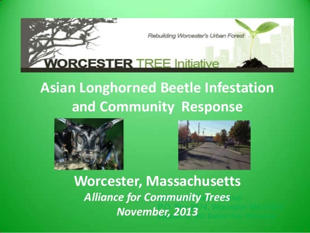Asian Longhorned Beetle Infestation and Community Response  Worcester, Massachusetts Worcester Tree Initiative Alliance fo...