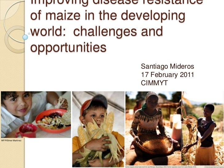 Improving Disease Resistance of Maize in the Developing World