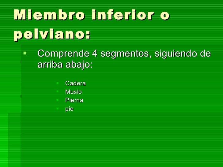 Miembro inferior o pelviano: <ul><li>Comprende 4 segmentos, siguiendo de arriba abajo: </li></ul><ul><ul><ul><ul><li>Cader...