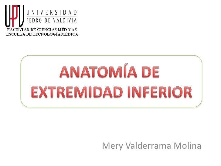 Mery Valderrama Molina