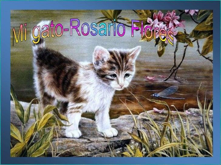 Mi gato-Rosario Flores<br />