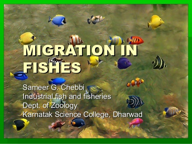 MIGRATION IN FISHES Sameer G. Chebbi Industrial fish and fisheries Dept. of Zoology Karnatak Science College, Dharwad