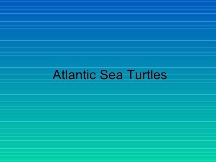 Atlantic Sea Turtles