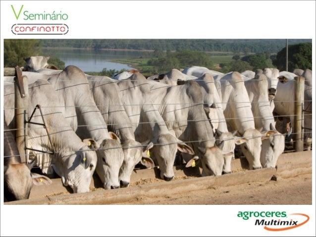 Participe do Movimento Pecuária do Futuro