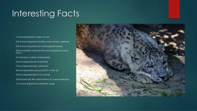 an introduction to the descriptive and behavioral aspects of snow leopards The leopard (panthera pardus) /ˈlɛpərd/ is one of the five species in the genus  panthera,  5 distribution and habitat 6 ecology and behaviour  the tiger- snow leopard clade diverged from the rest of panthera around 29 million years   the cat: an introduction to the study of backboned animals, especially  mammals.