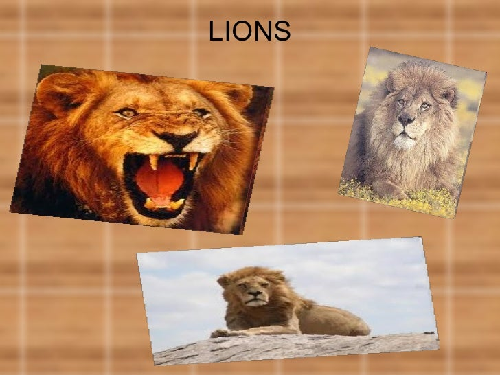 Lions (Mikel)