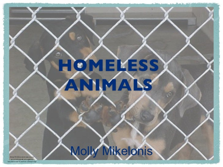 HOMELESS ANIMALS                              MOLLY MIKELONIS            HTTP://  WWW.NEWSTREAMZ.COM/2010/08/23/PALS-RECOG...