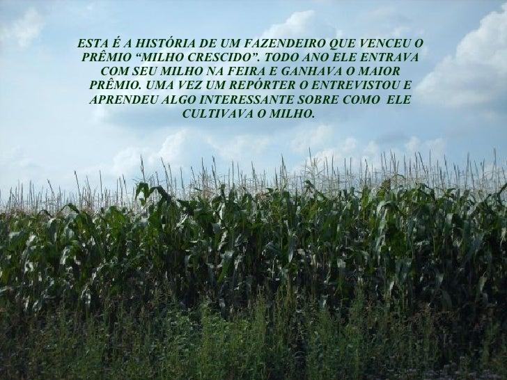 """ESTA É A HISTÓRIA DE UM FAZENDEIRO QUE VENCEU O PRÊMIO """"MILHO CRESCIDO"""". TODO ANO ELE ENTRAVA COM SEU MILHO NA FEIRA E GAN..."""