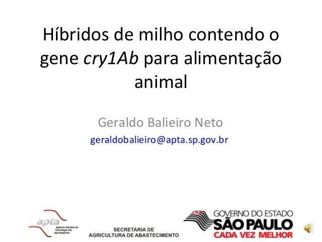 Híbridos de milho contendo o gene cry1Ab para alimentação animal Geraldo Balieiro Neto geraldobalieiro@apta.sp.gov.br