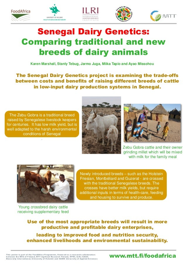 www.mtt.fi/foodafrica Senegal Dairy Genetics: Comparing traditional and new breeds of dairy animals This poster is part of...
