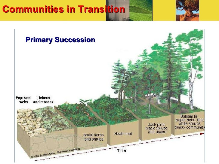 Biology 12 ecology communities secondary succession occurs when a climax community is disturbed eg forest fire deforestation etc but the soil or bottom sediment remains publicscrutiny Choice Image