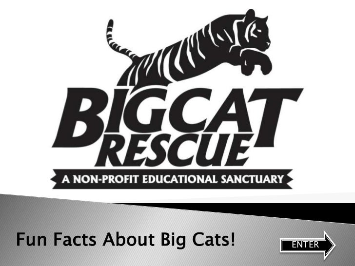 Fun Facts About Big Cats!   ENTER