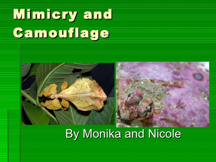Mimicry and Camouflage By Monika and Nicole