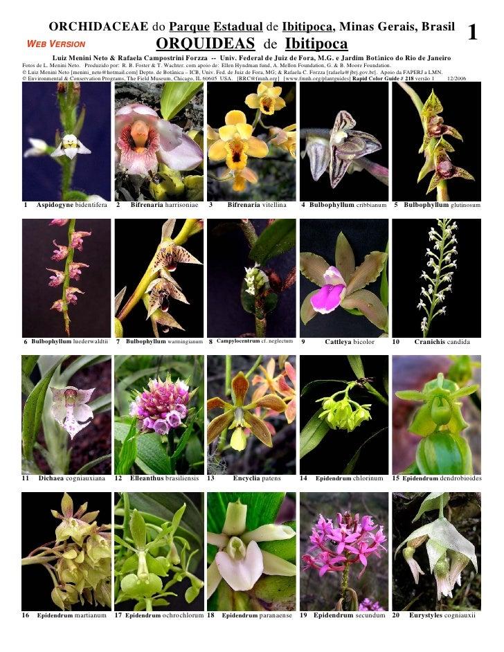 Minas gerais  - ibitipoca orchidaceae