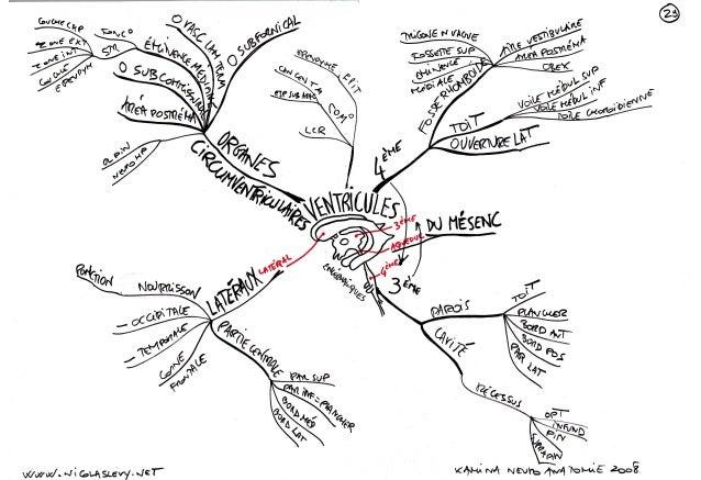 Mind maps cartes mentales ventricules vascularisation meninges