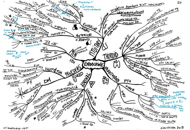 Mind maps pathology endocrine system