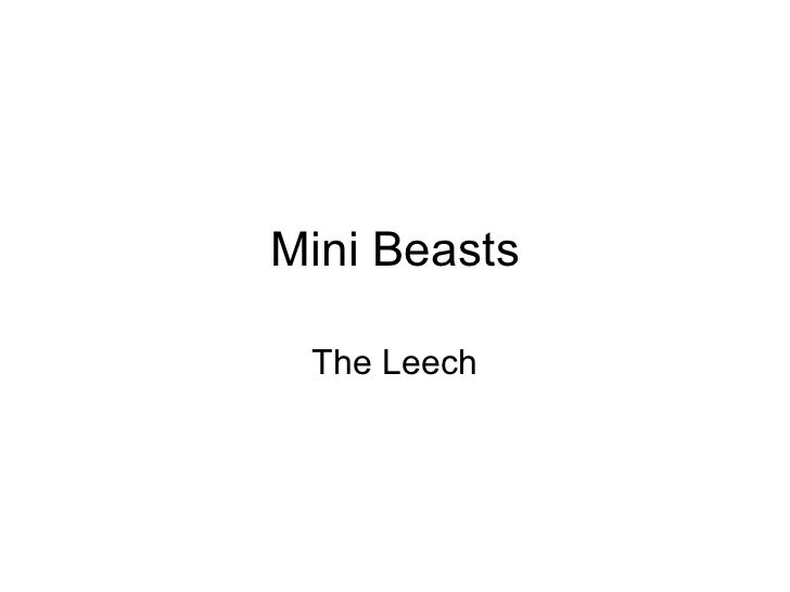 Mini Beasts The Leech