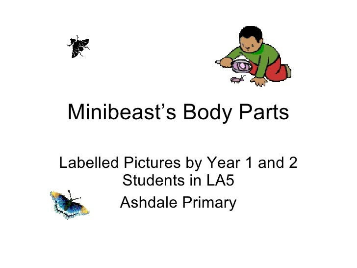 Minibeast's Body Parts Labelled Pictures by Year 1 and 2 Students in LA5 Ashdale Primary