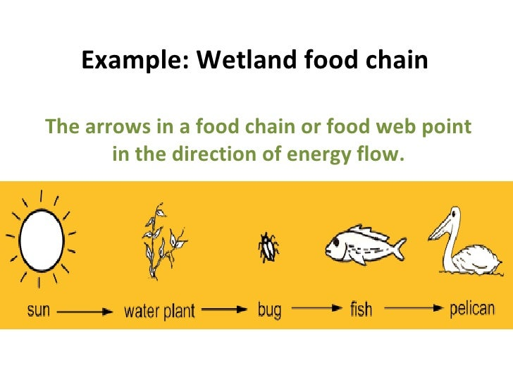 Mini Beasts Bugs And More on Wetland Food Chain Example