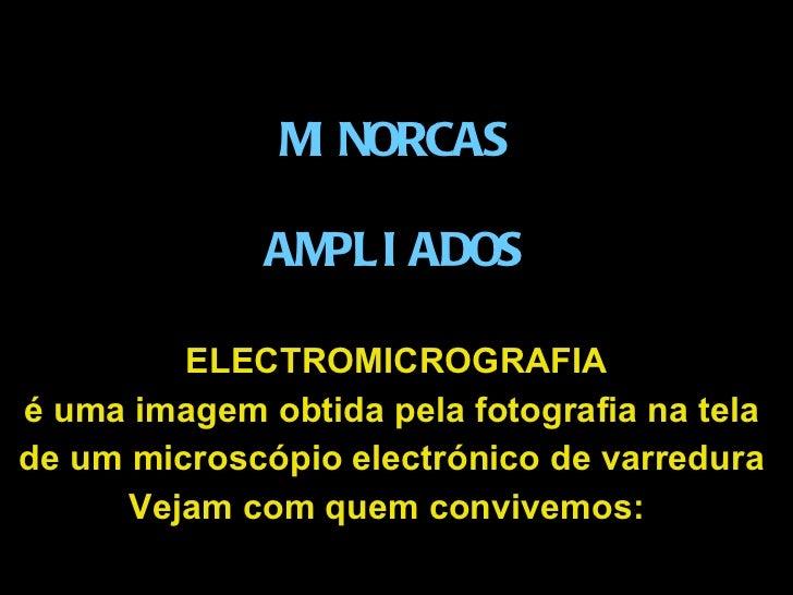 MINORCAS AMPLIADOS ELECTROMICROGRAFIA é uma imagem obtida pela fotografiana  tela  de um microscópio electrónico de varr...