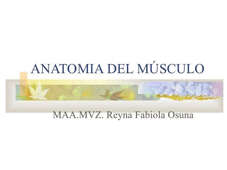 ANATOMIA DEL MÚSCULO MAA.MVZ. Reyna Fabiola Osuna