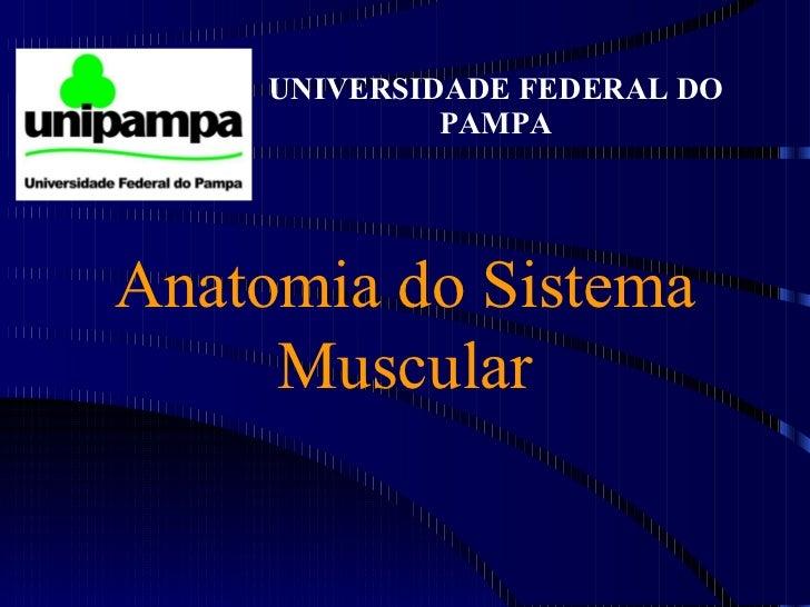 Aula de Anatomia - Musculos;